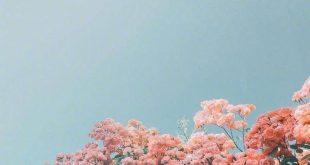100 Beautiful iPhone wallpaper , iphone background... - #background #Beautiful #...